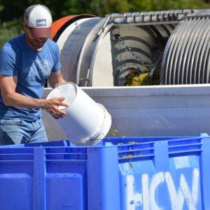 Adam McBride, alumnus, works outside at Hickory Creek Winery